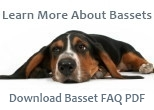 Basset Hound Facts PDF
